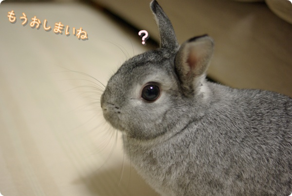 とまどうウサギ
